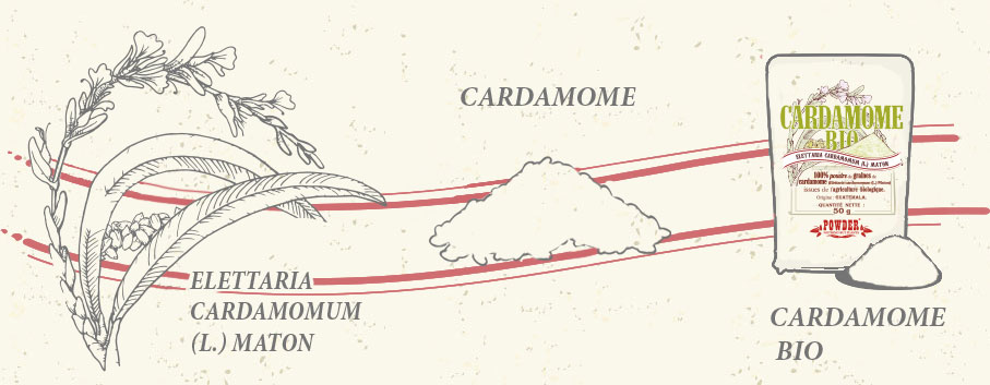 CARDAMOMO POWDER